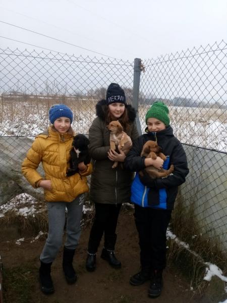 Szukamy domu dla szczeniaczków